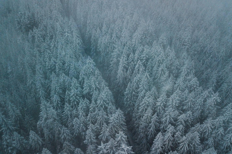 Best Mt Hood Elopement Locations Timberline Road