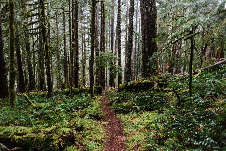 Best Mt Hood Elopement Locations Salmon River Trail